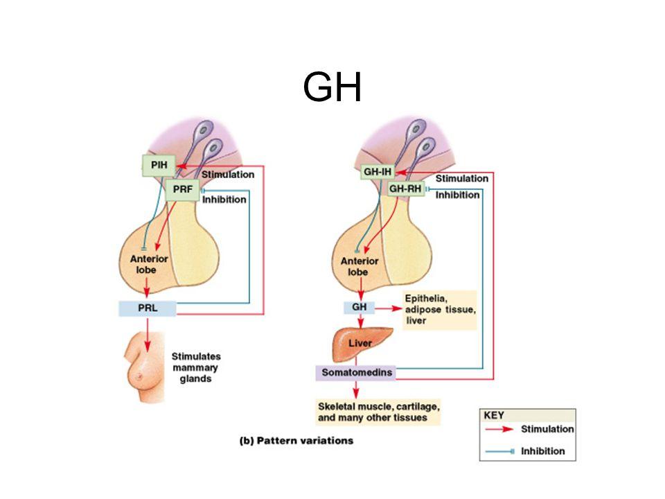 GH Figure 18–8b