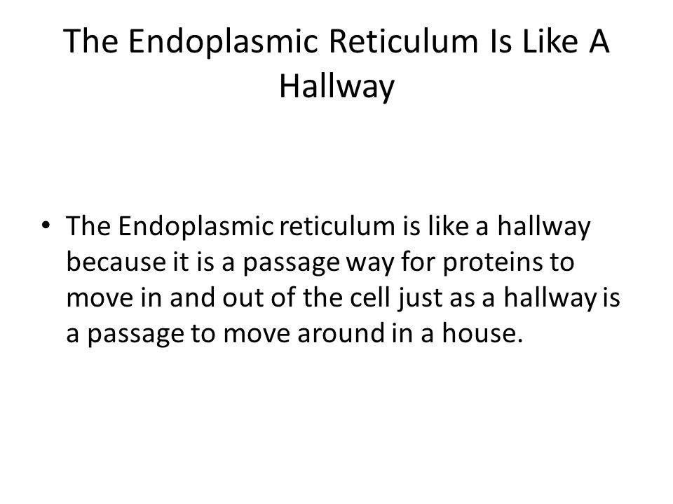 The Endoplasmic Reticulum Is Like A Hallway