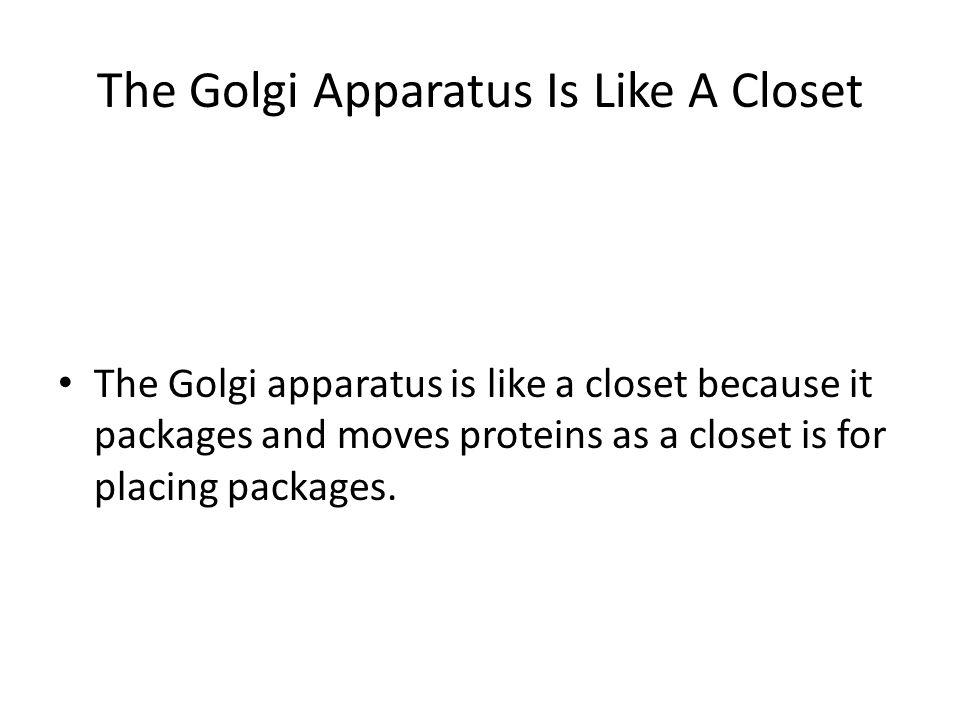 The Golgi Apparatus Is Like A Closet