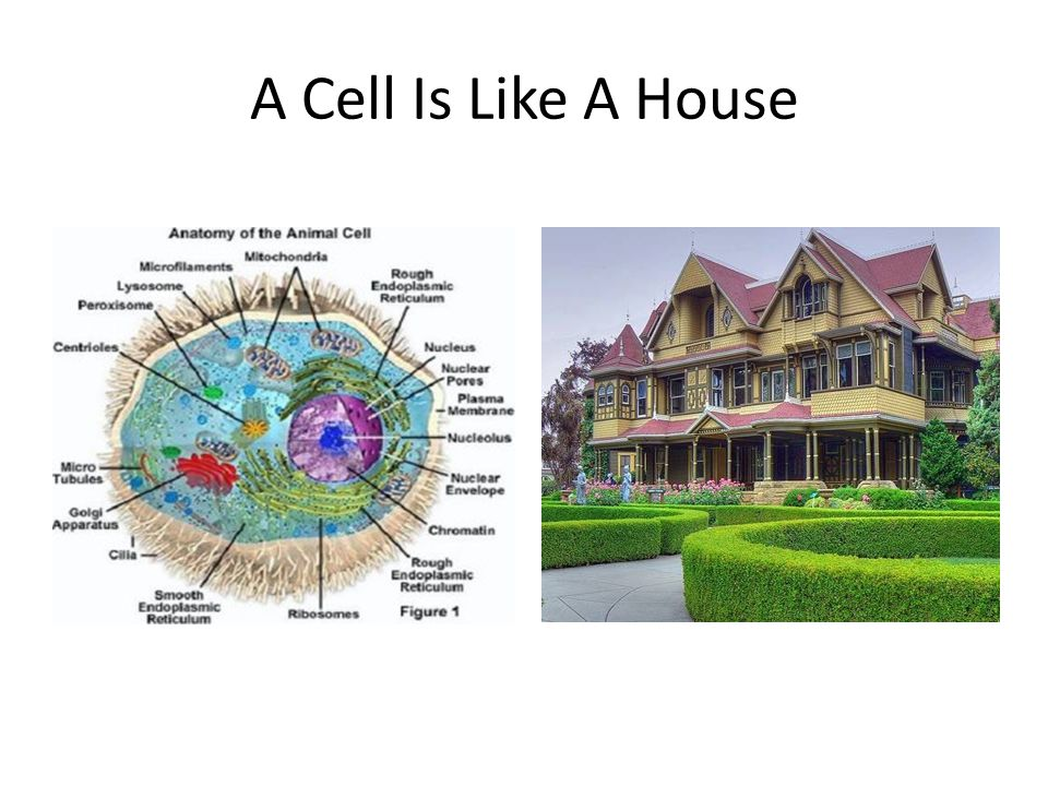 A Cell Is Like A House