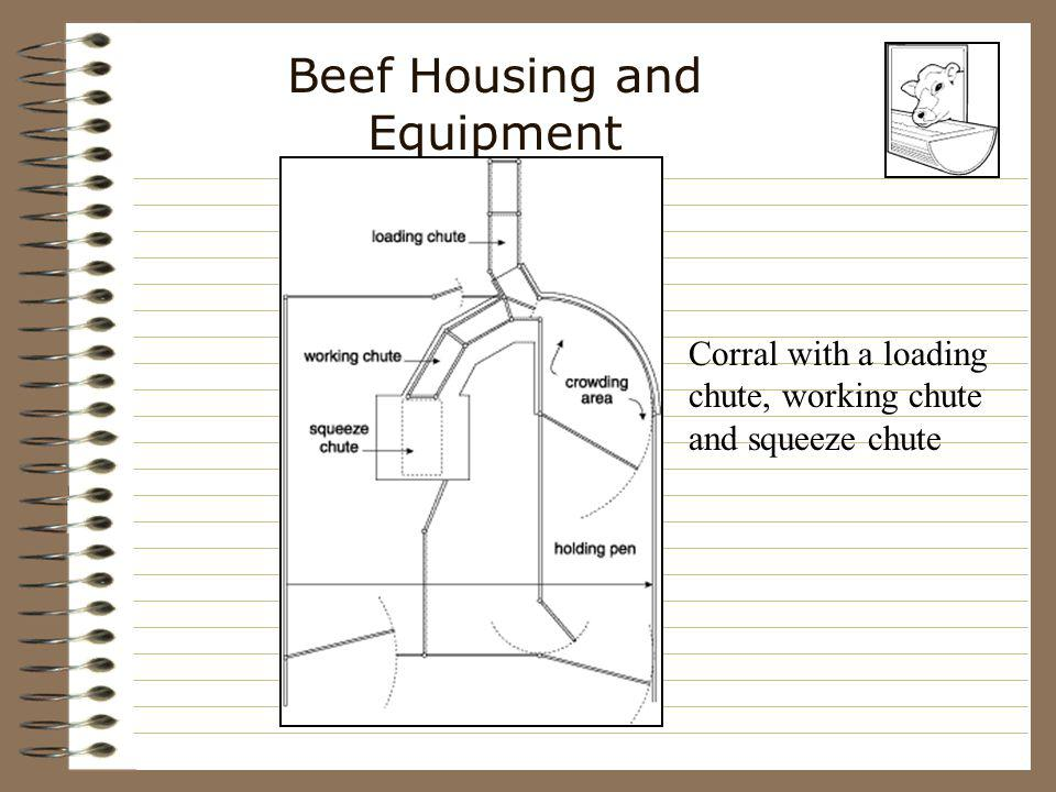 Beef Housing and Equipment