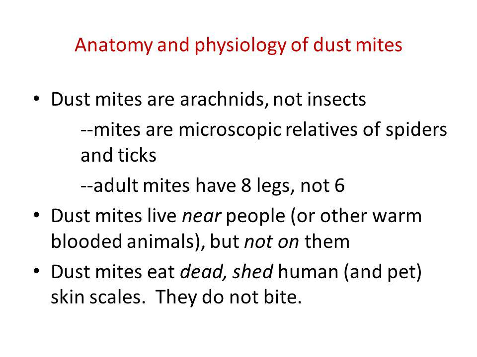 Anatomy and physiology of dust mites
