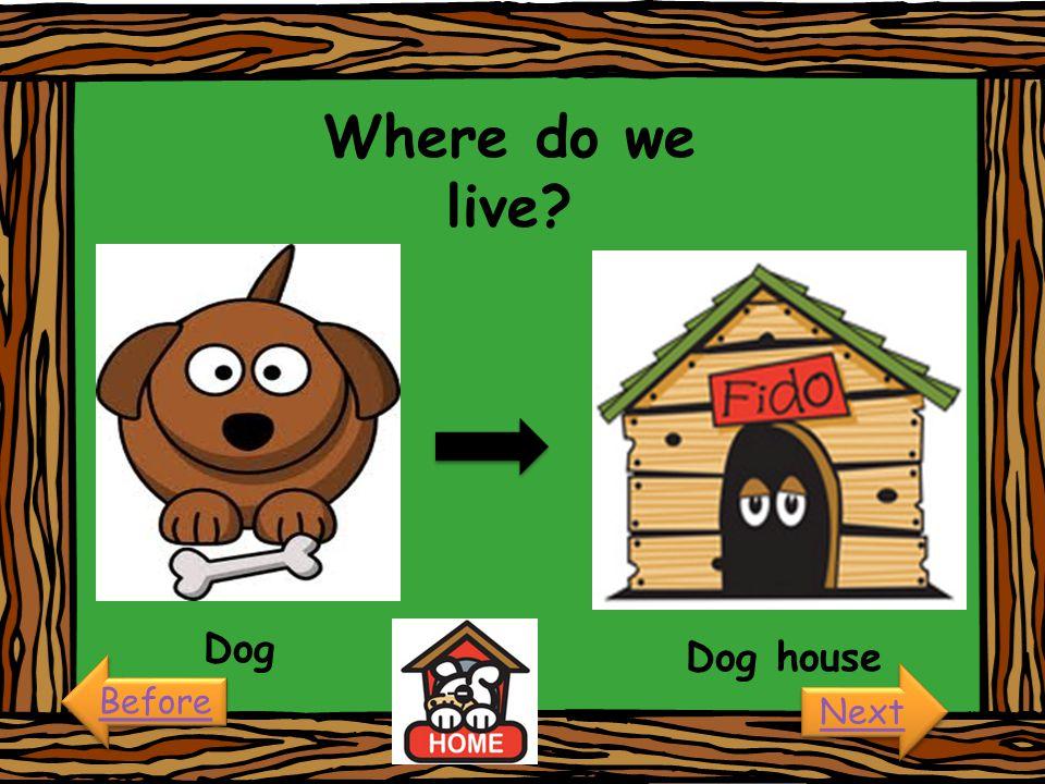Where do we live Dog Dog house Before Next
