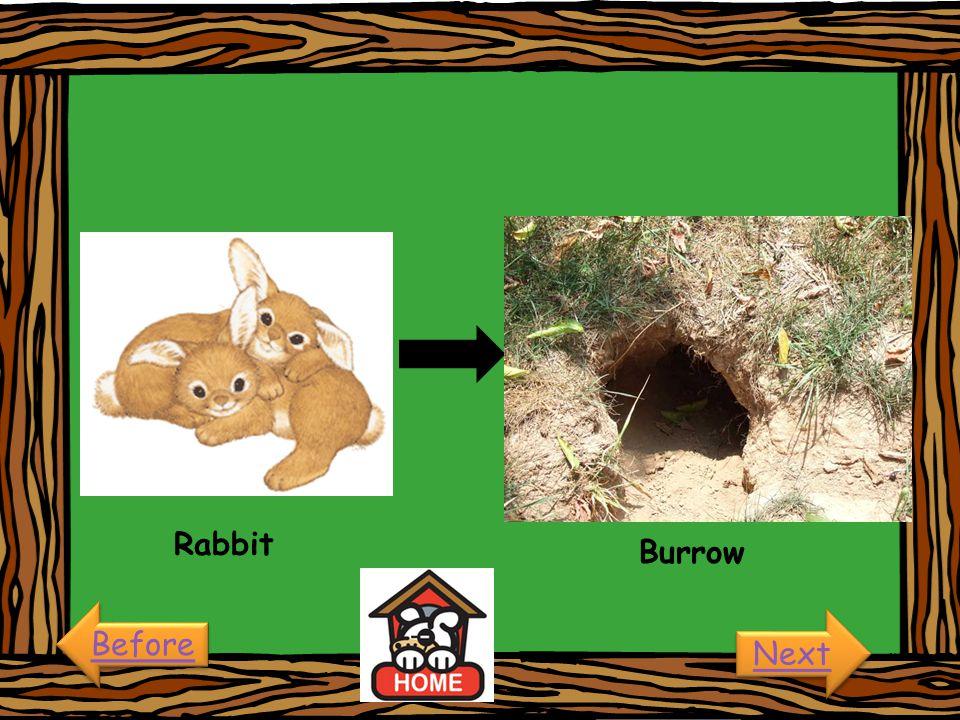 Rabbit Burrow Before Next