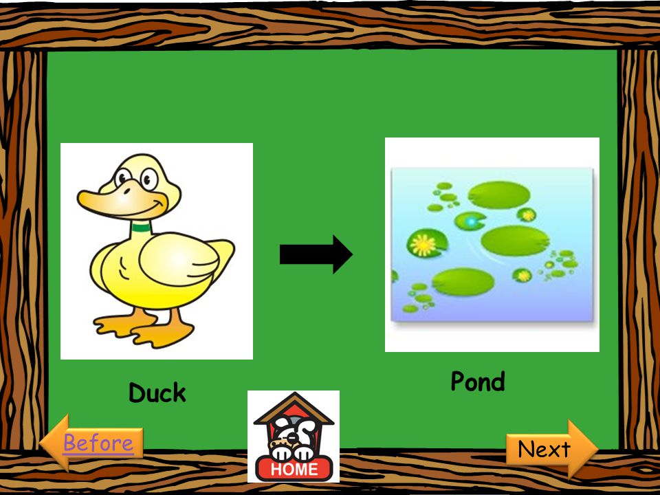 Pond Duck Before Next