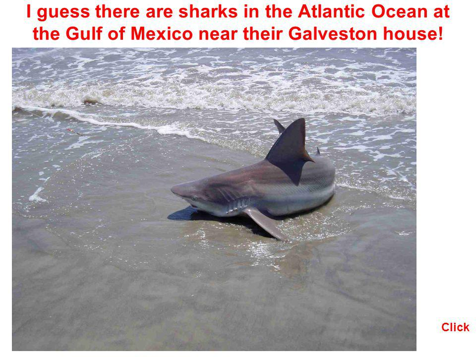 I guess there are sharks in the Atlantic Ocean at the Gulf of Mexico near their Galveston house!