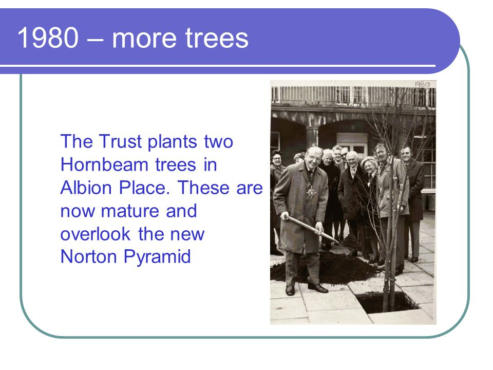 1980 – more trees The Trust plants two Hornbeam trees in Albion Place.