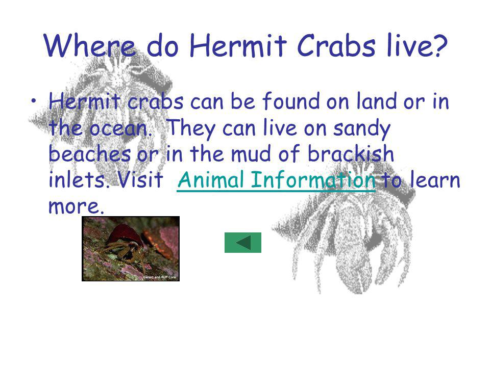Where do Hermit Crabs live
