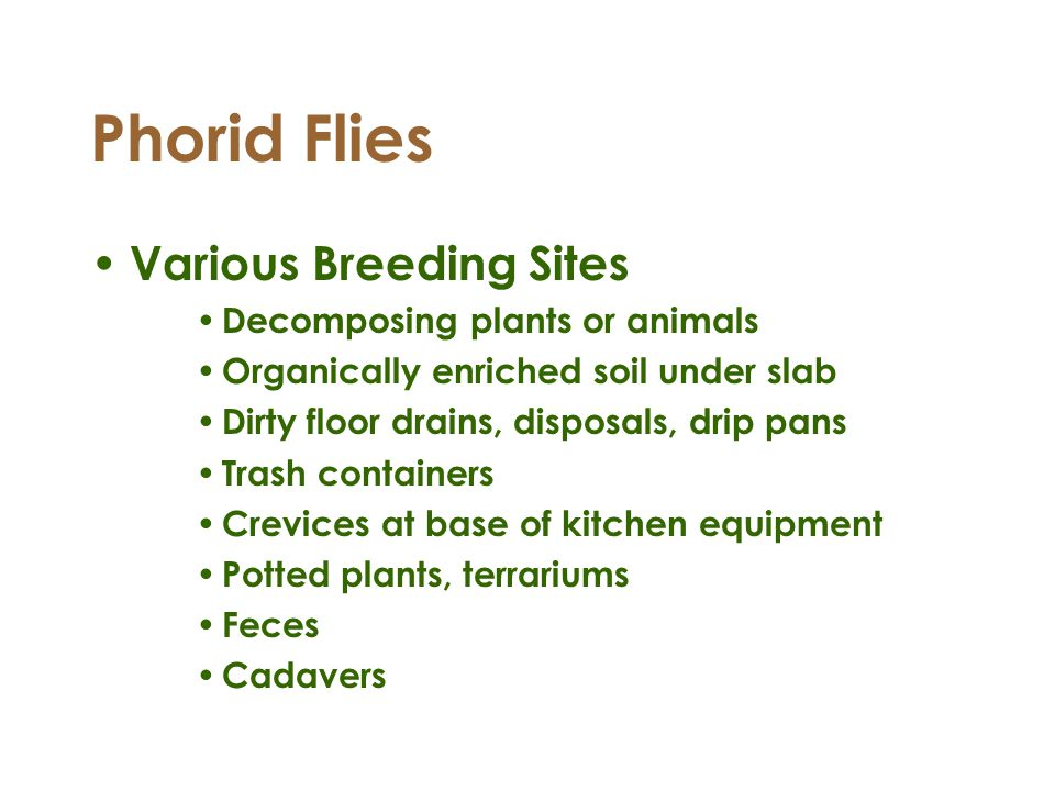 Phorid Flies Various Breeding Sites Decomposing plants or animals