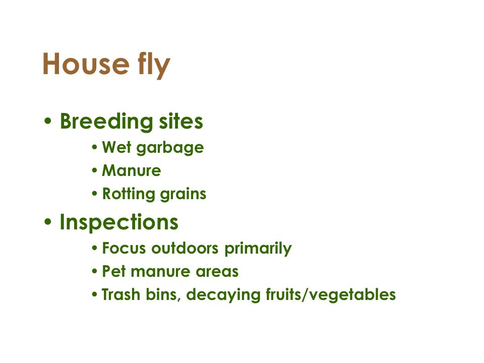 House fly Breeding sites Inspections Wet garbage Manure Rotting grains