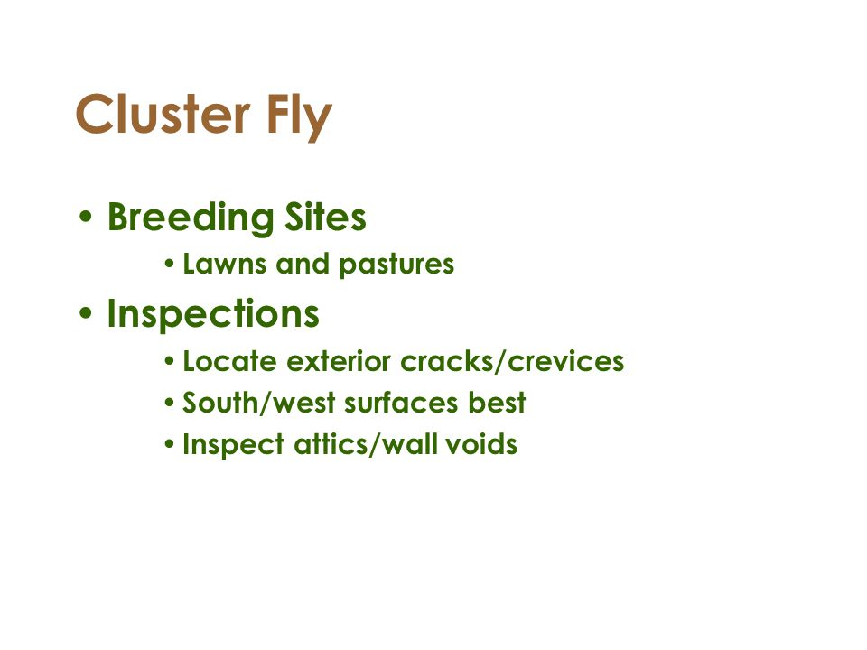 Cluster Fly Breeding Sites Inspections Lawns and pastures