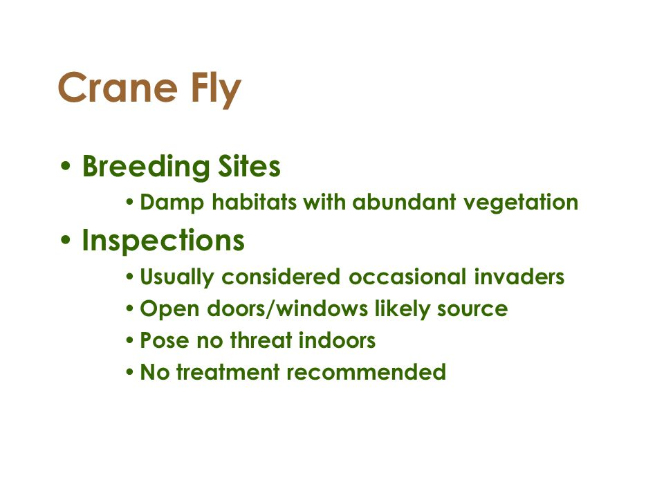 Crane Fly Breeding Sites Inspections