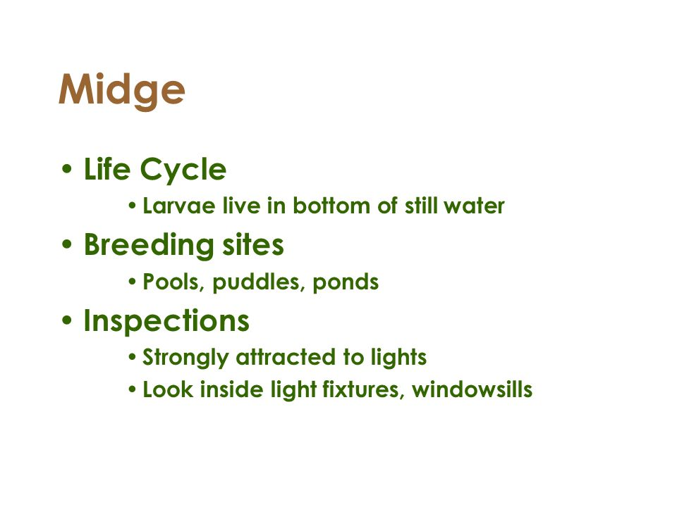 Midge Life Cycle Breeding sites Inspections