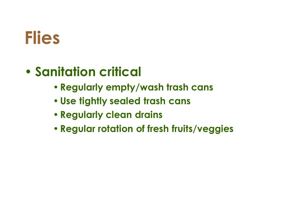 Flies Sanitation critical Regularly empty/wash trash cans