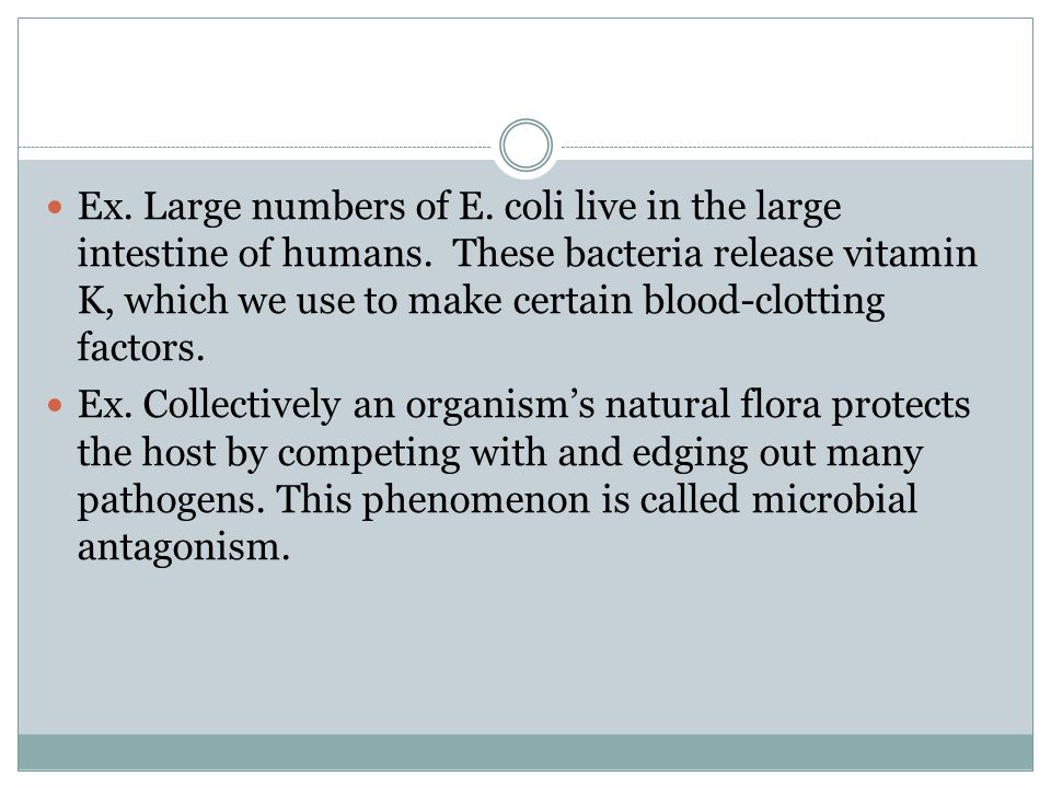 Ex. Large numbers of E. coli live in the large intestine of humans