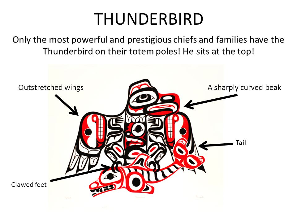 THUNDERBIRD Only the most powerful and prestigious chiefs and families have the Thunderbird on their totem poles! He sits at the top!