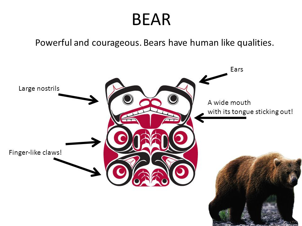 BEAR Powerful and courageous. Bears have human like qualities. Ears