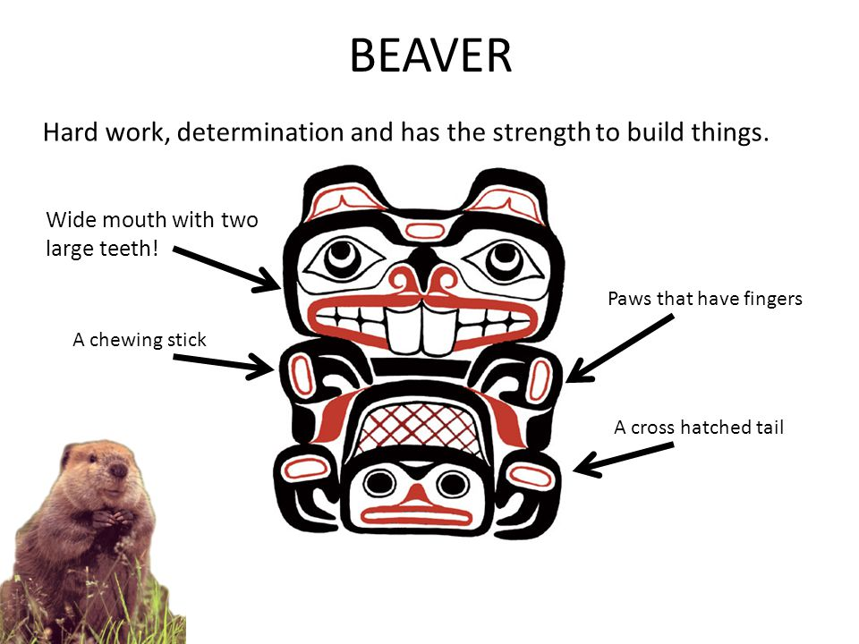 BEAVER Hard work, determination and has the strength to build things.