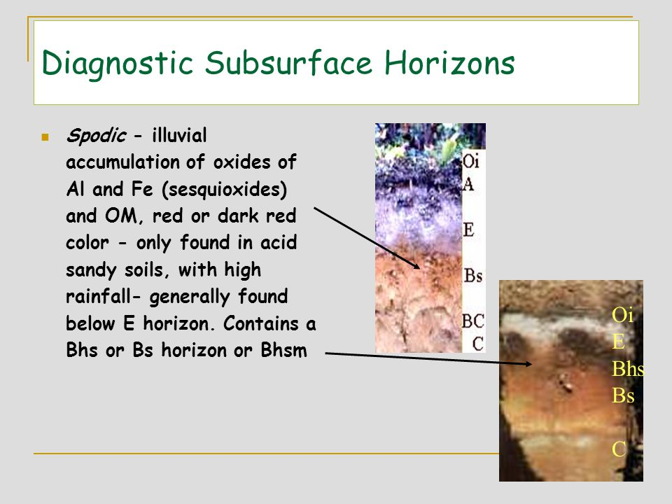 Diagnostic Subsurface Horizons