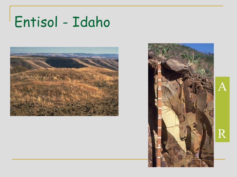 Entisol - Idaho A R