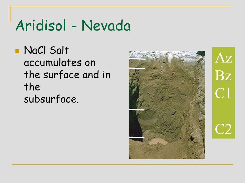 Az Bz C1 C2 Aridisol - Nevada