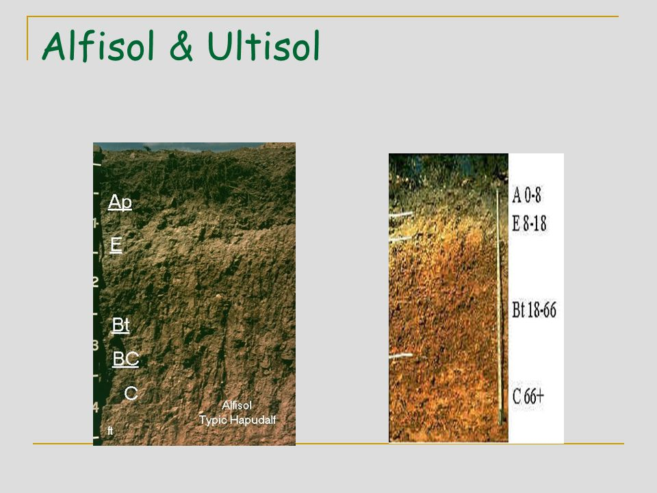 Alfisol & Ultisol