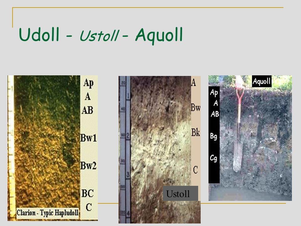 Udoll - Ustoll - Aquoll Ustoll