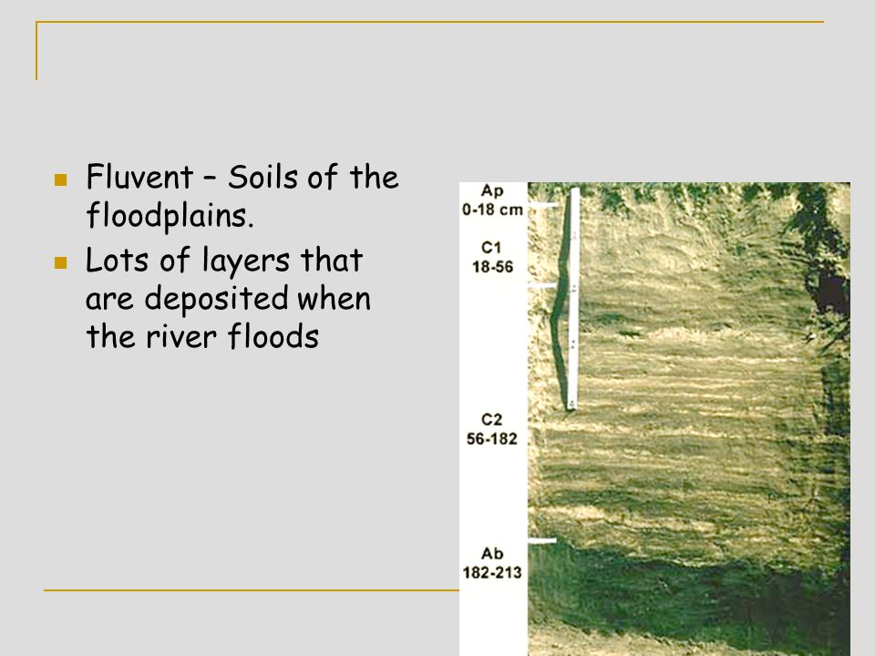 Fluvent – Soils of the floodplains.