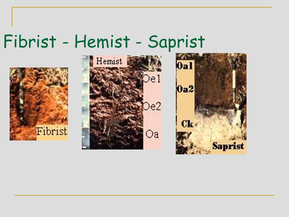 Fibrist - Hemist - Saprist