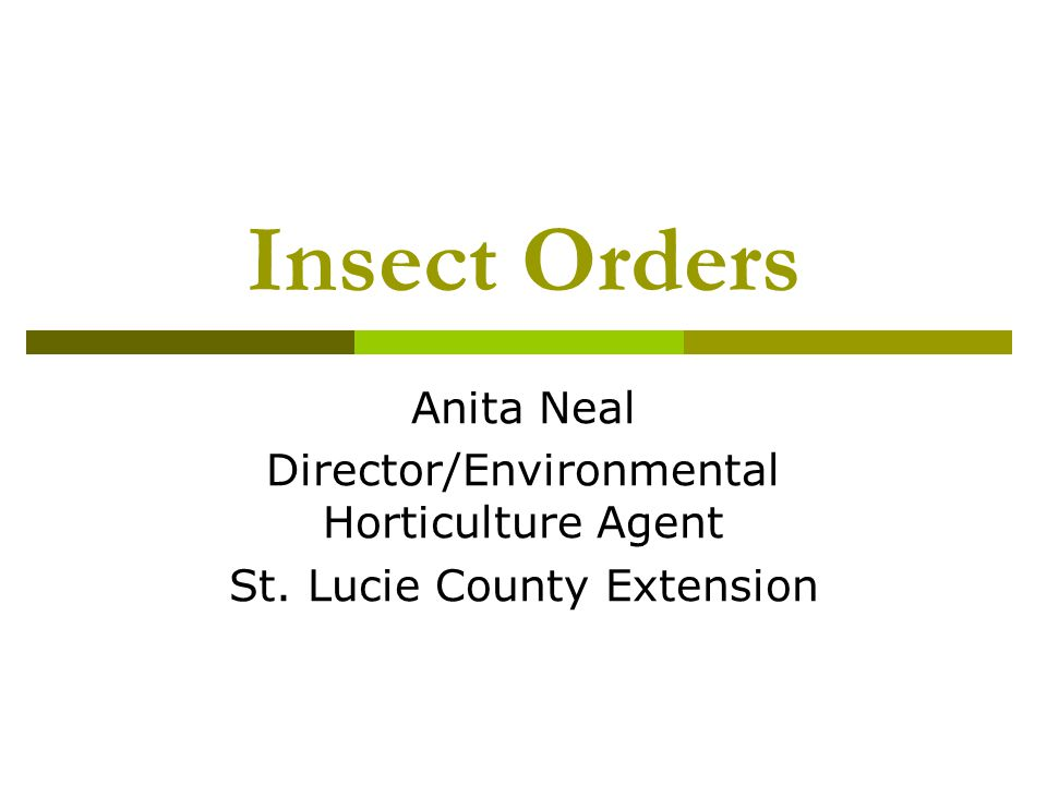 Insect Orders Anita Neal Director/Environmental Horticulture Agent