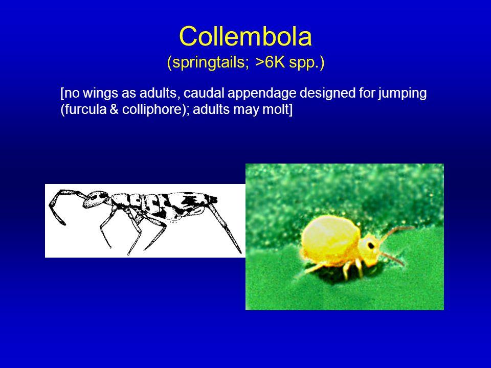 (springtails; >6K spp.)
