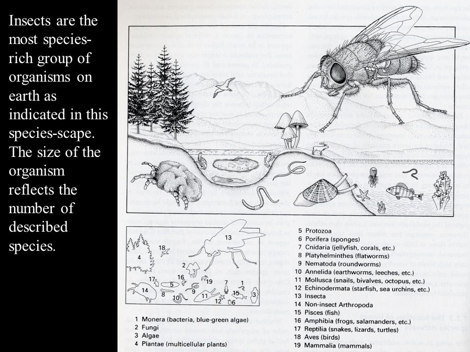 Insects are the most species-rich group of organisms on earth as indicated in this species-scape.
