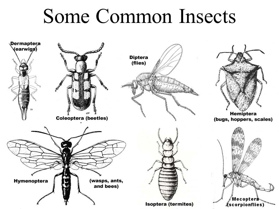 Some Common Insects