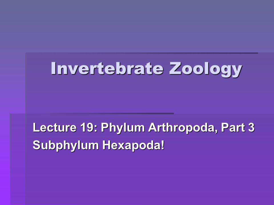 Lecture 19: Phylum Arthropoda, Part 3 Subphylum Hexapoda!