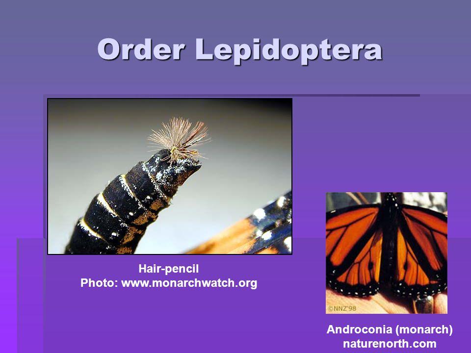 Photo: www.monarchwatch.org