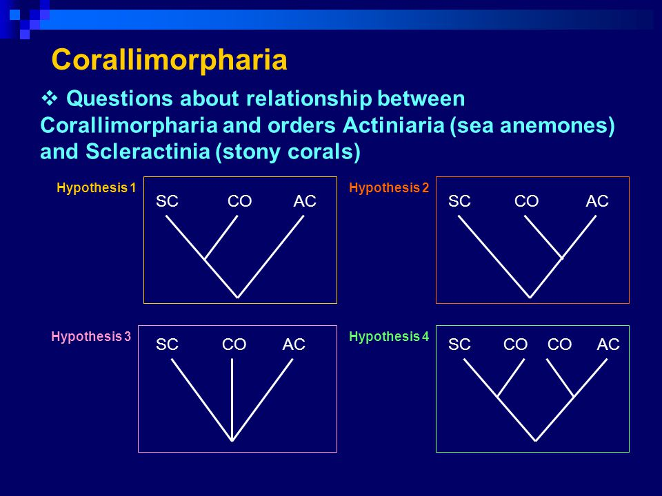 Corallimorpharia Questions about relationship between Corallimorpharia and orders Actiniaria (sea anemones) and Scleractinia (stony corals)