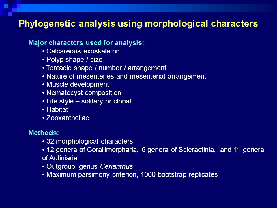Phylogenetic analysis using morphological characters