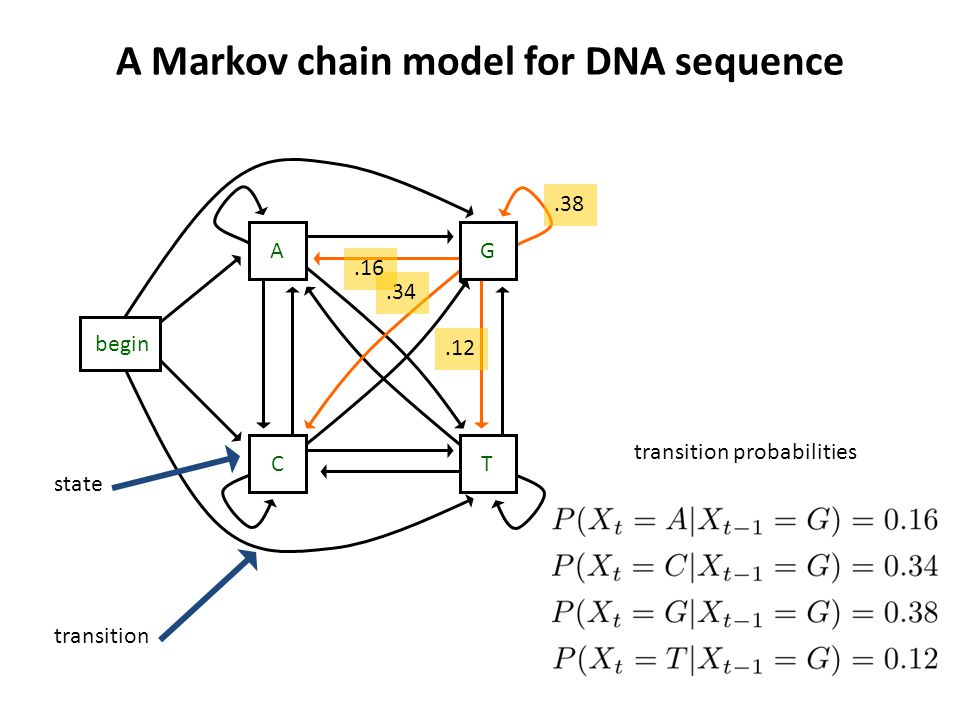 A Markov chain model for DNA sequence