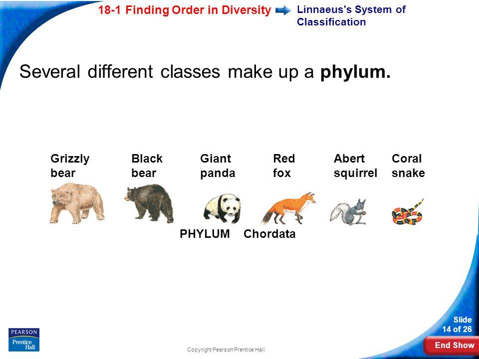 Linnaeus s System of Classification