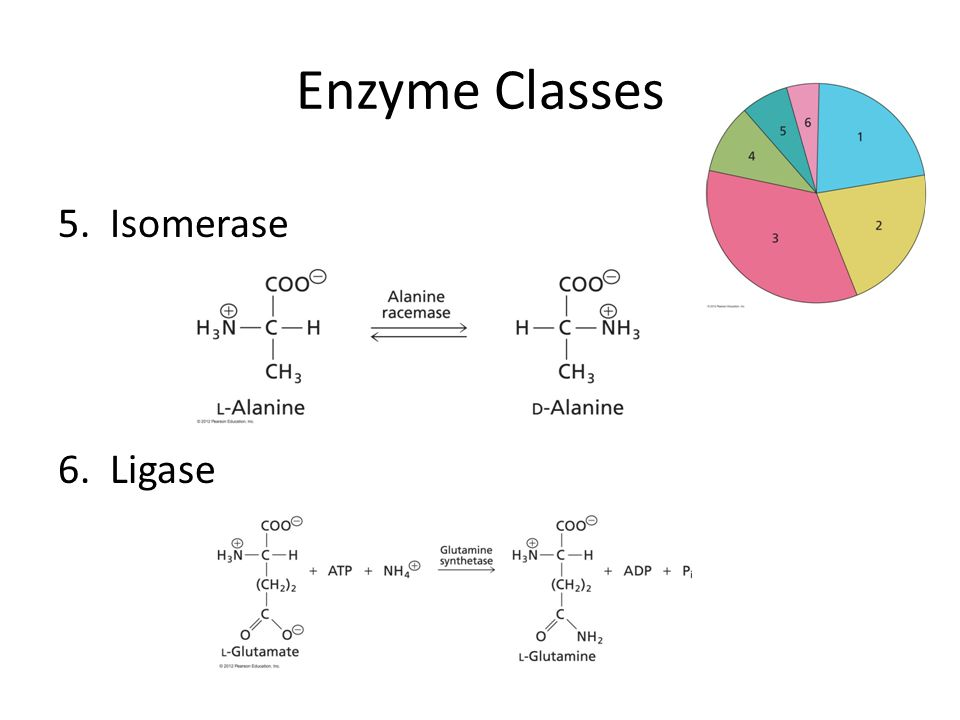 Enzyme Classes 5. Isomerase 6. Ligase