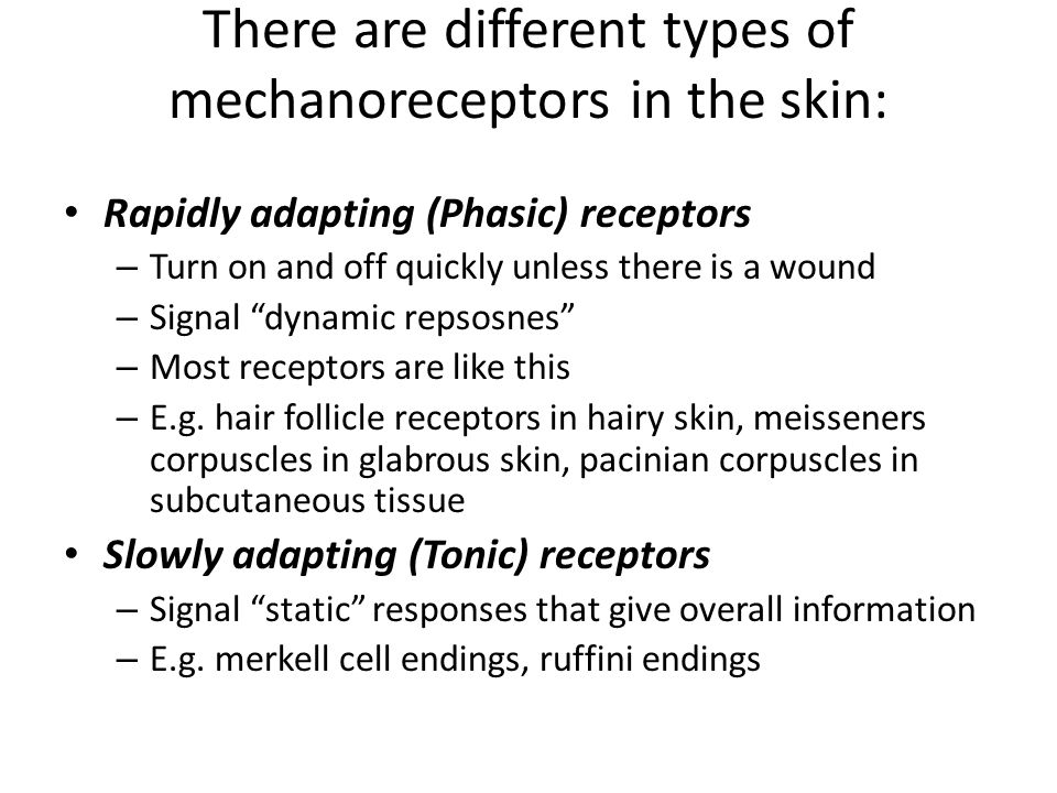 There are different types of mechanoreceptors in the skin: