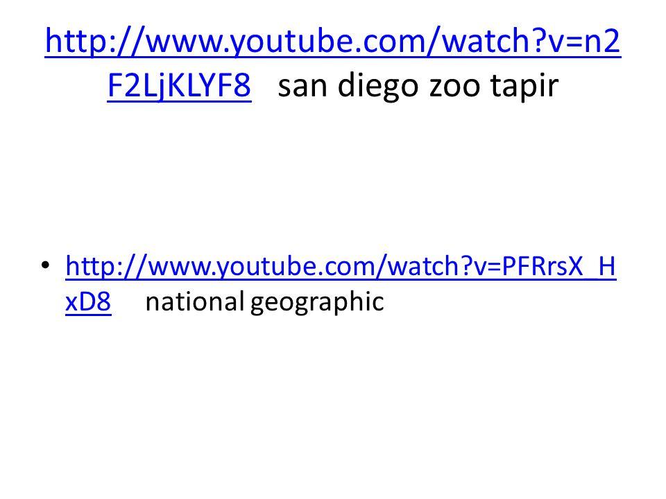 http://www.youtube.com/watch v=n2F2LjKLYF8 san diego zoo tapir