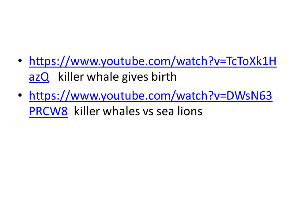 https://www.youtube.com/watch v=TcToXk1HazQ killer whale gives birth