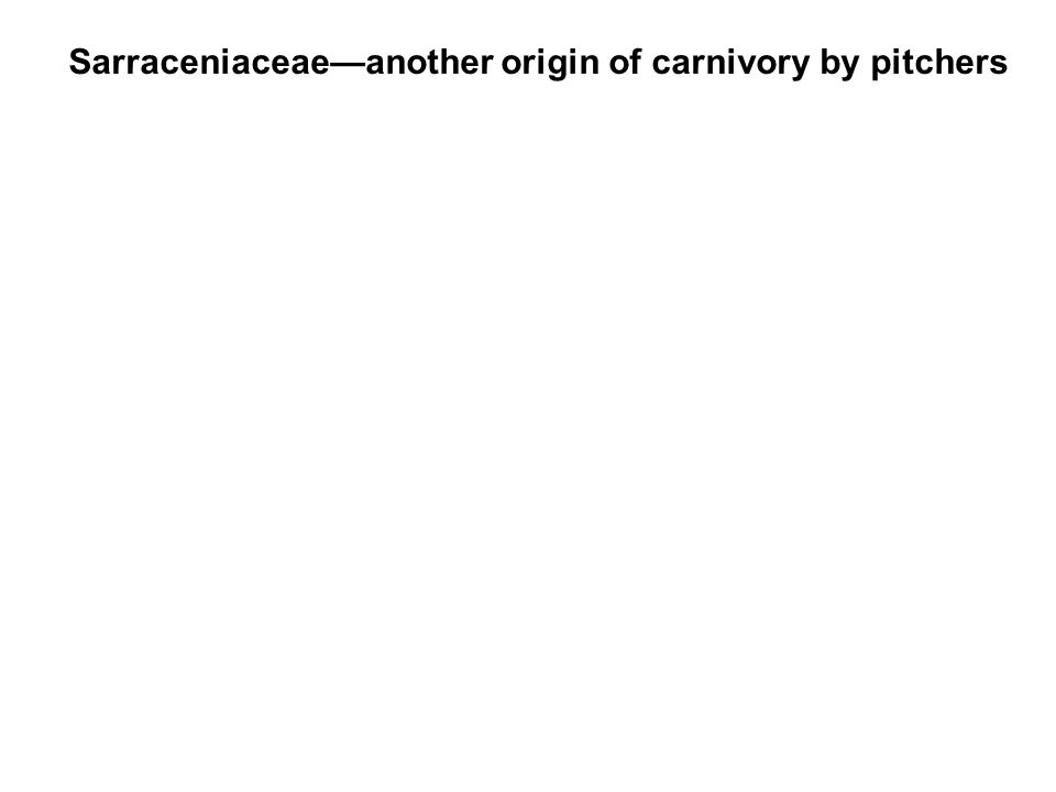 Sarraceniaceae—another origin of carnivory by pitchers
