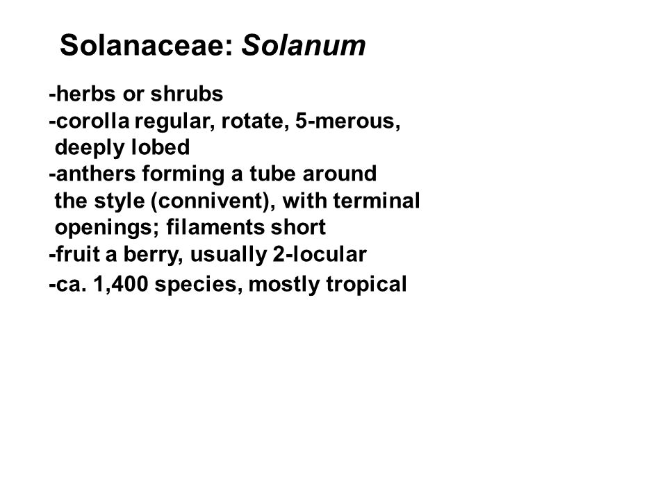 Solanaceae: Solanum -herbs or shrubs