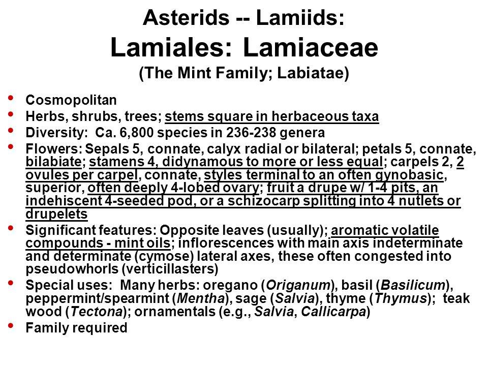Asterids -- Lamiids: Lamiales: Lamiaceae (The Mint Family; Labiatae)