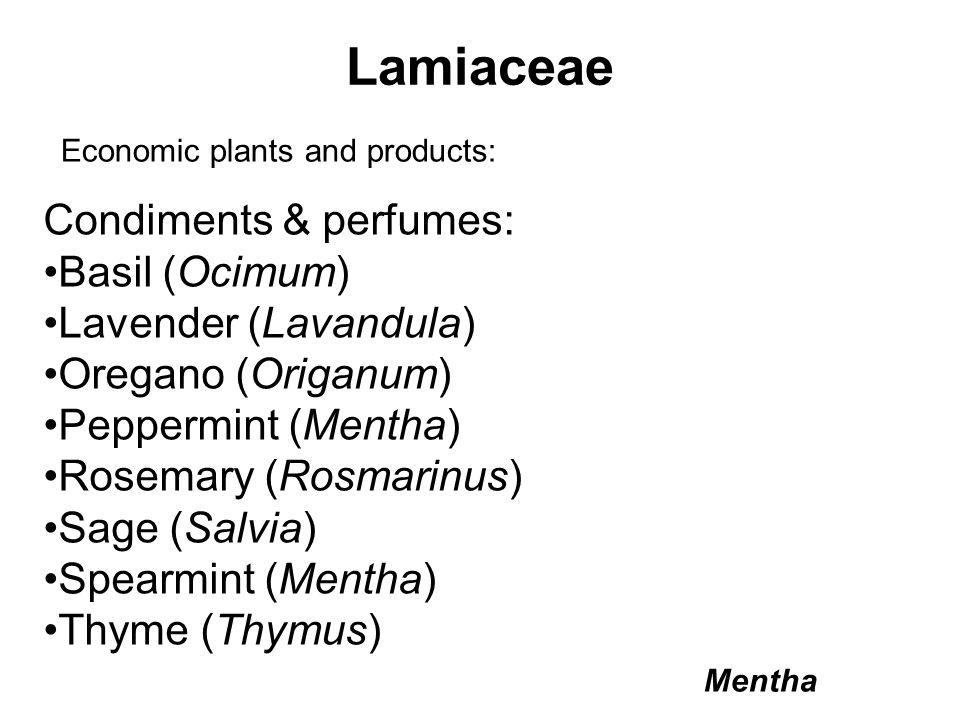 Economic plants and products: