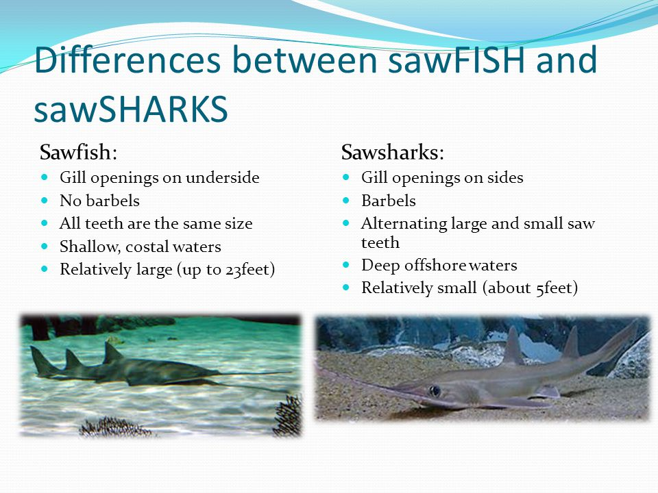 Differences between sawFISH and sawSHARKS