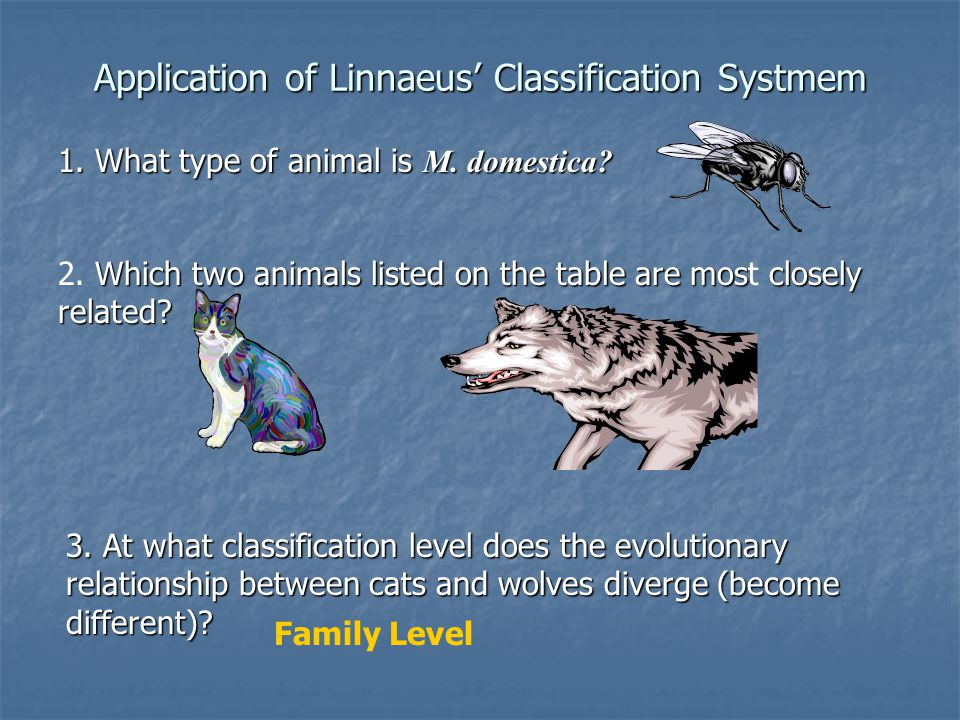 Application of Linnaeus' Classification Systmem