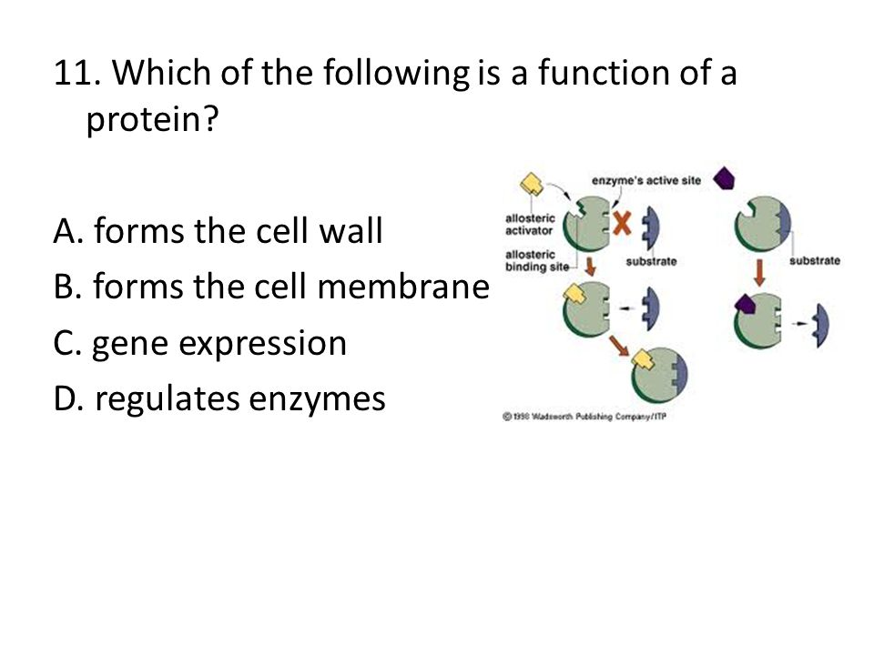 11. Which of the following is a function of a protein. A